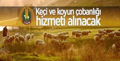 'ÇOBANLIK' HİZMETİ ALINACAK
